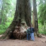 Jessica and Andrew pose beneath a giant redwood tree. (7/8/2010)