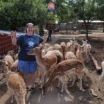 Jessica is mobbed by deer while feeding them at the Grand Canyon Deer Farm in Williams, AZ. (7/25/2014)